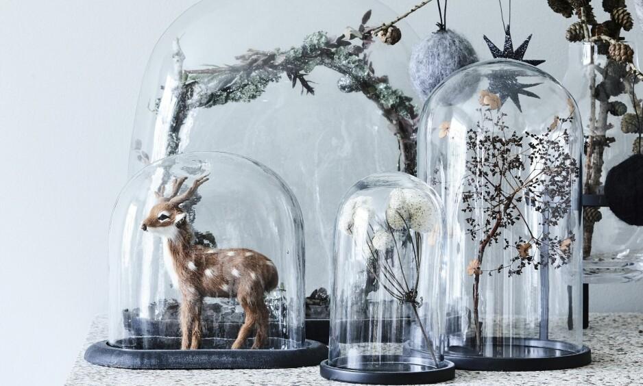 JULEPYNT: Fine glassmontre fra Day Home og Nordstjerne er fylt med julepynt og skatter fra skogen. Her er blant annet en flettet krans og tørkede blomster. En lerkegrein er satt i en vase og pyntet med stjerner og kuler. FOTO: Mette Wotkjær
