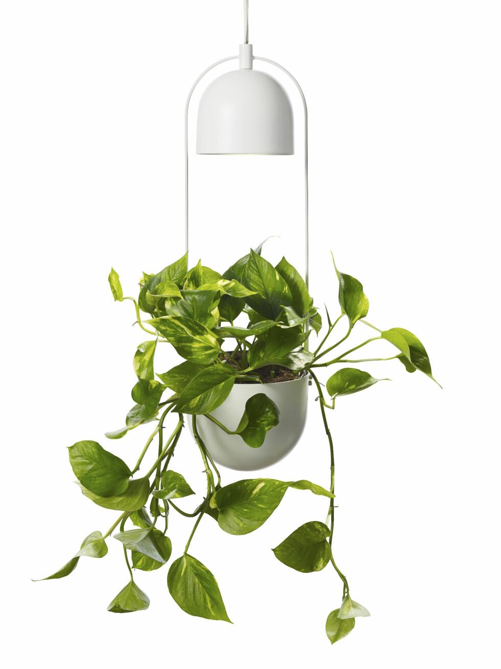 Potte med belysning (kr 400, Plantasjen).