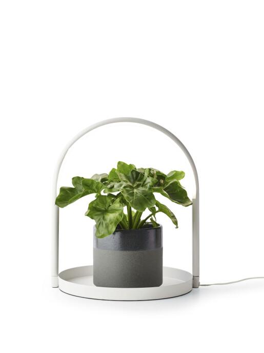 «Studia» med ledlys sørger for maks trivsel for plantene (kr 450, Plantasjen).