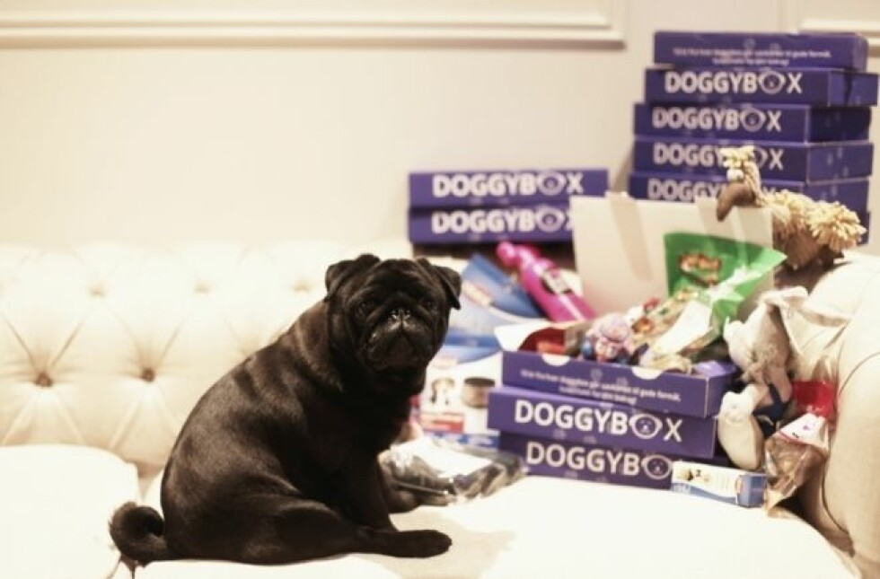 Doggybox |250,-| https://www.petworld.no/no/artiklar/doggybox-small-abonnement.html