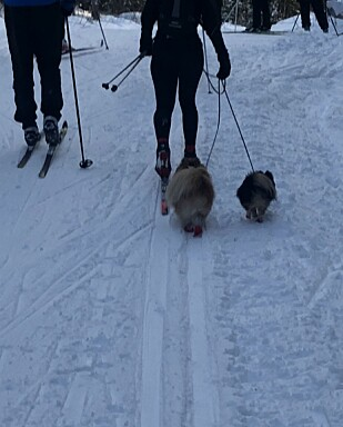 I SPORET: Eksempel på hunder i løypa, der eieren faktisk har kort bånd. FOTO: Malini Gaare Bjørnstad