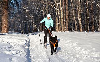 - Også de små «veskehundene» blir raskt en trussel i skisporet