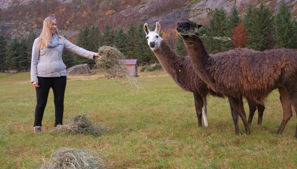BYGDELIV: Stine har lamaer i hagen og lever et liv som for mange vil fremstå som eksotisk. FOTO: Marthe Svendsen