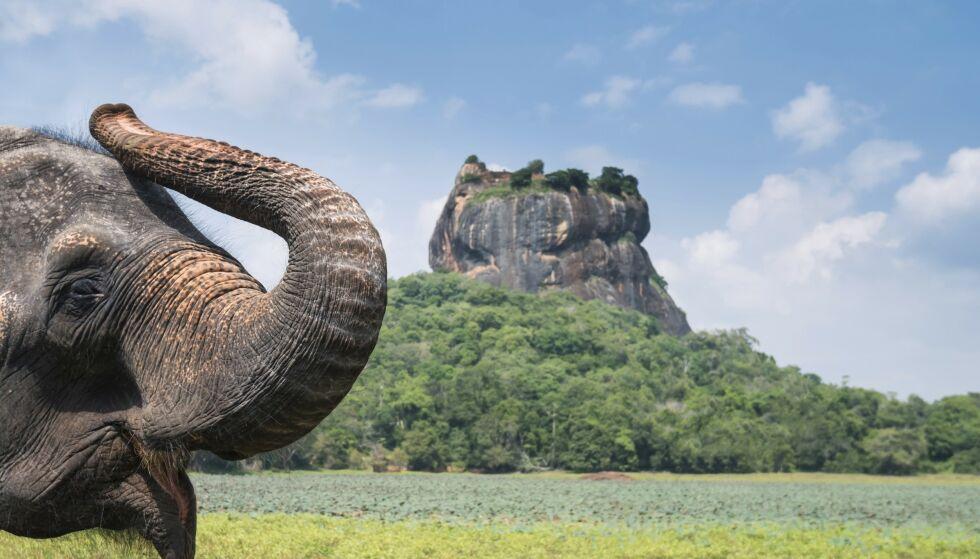 Vakre strender, krydret mat og en smilende befolkning gjør Sri Lanka til et fantastisk land å besøke