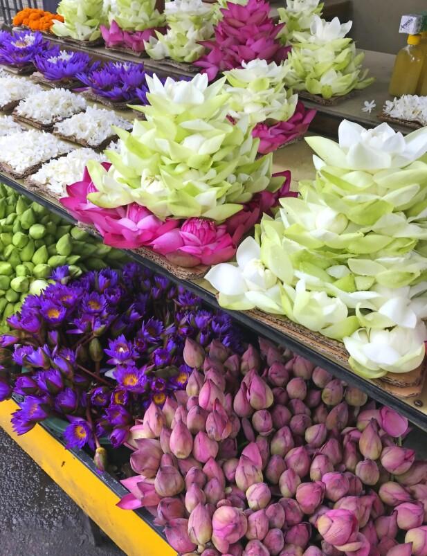 Det kryr av farger og dufter og blomster – som disse lotusblomstene.