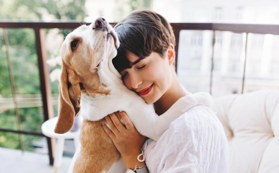 LIGER PÅ DEG: Ny forskning viser at det stemmer at vi ofte velger hunder som minner om oss selv. FOTO: NTB Scanpix