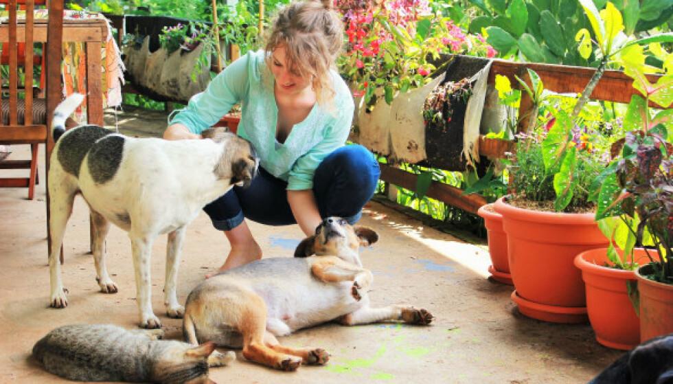 KOS OG STELL: Arbeidsoppgavene som huspasser kan variere; fra å kun vanne planter til å skulle passe 11 dyr som Charlie og Luke gjorde i Costa Rica. FOTO: Privat