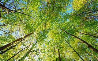 6 enkle tiltak for en grønnere hverdag