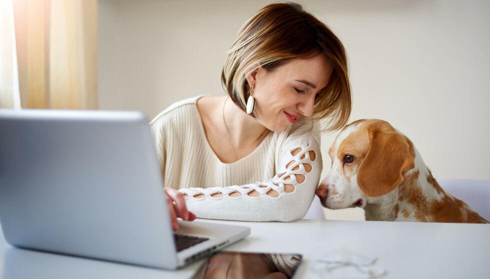 TA MED HUNDEN PÅ JOBB: Forskning viser at det reduserer stress og gjør deg gladere! FOTO: NTB Scanpix