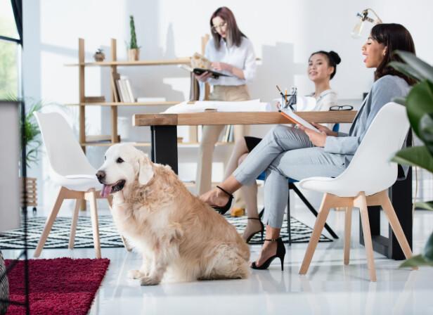 LA HUNDEN BLI MED PÅ JOBB: Hvem vil vel ikke ha en hund å kose med mellom slagene på jobb? FOTO: NTB Scanpix