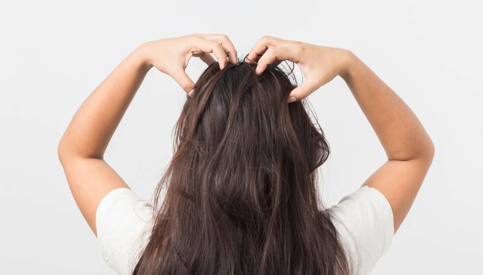 IKKE GLEM DETTE: Bruk fingertuppene til å massere inn tørrsjampoen i hodebunnen. FOTO: Scanpix