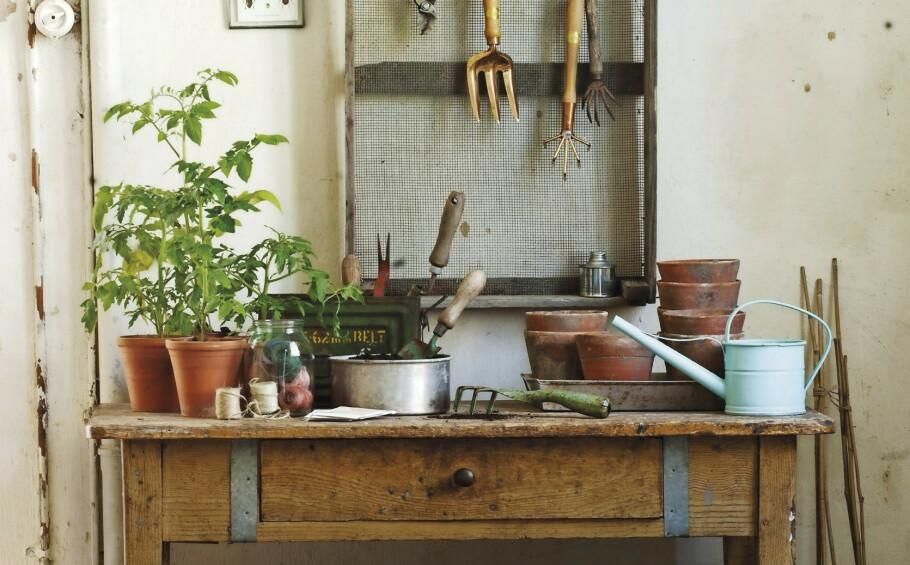 DYRKE GRØNNSAKER: Det er praktisk å skaffe seg et plantebord til potter, jord, frøposer og diverse hageting. Det kan for eksempel stå i en bod, et skur eller på terrassen. FOTO: Sari Tammikari
