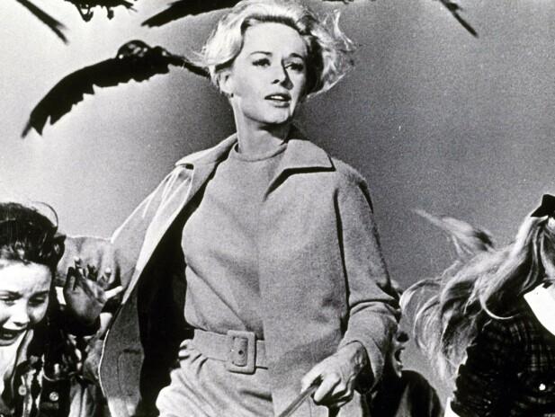 <strong>MED NEBB OG KLØR:</strong> Tippi Hedren ble stjerne av format da hun spilte i Hitchcocks «Fuglene». FOTO: NTBScanpix