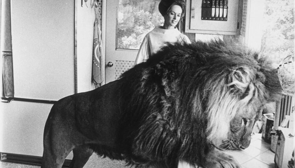 HVA ER DET TIL MIDDAG? ....Tja, si det. Løven Neil vurderer menyen hjemme på kjøkkenet hos Tippi. FOTO: NTBScanpix