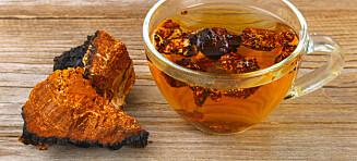 Kan denne soppen gi deg bedre helse?