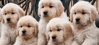 Drømmehotell for alle hundeelskere!