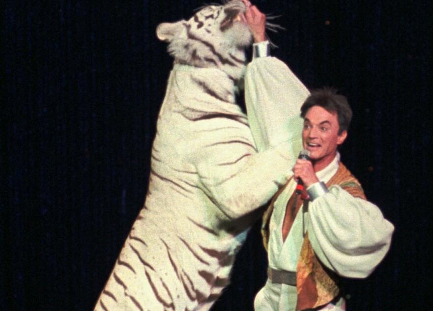 GLANSDAGENE: Roy Horn under suksessforestillingen som spilte 14 år i Las Vegas. I 2003 endte showet i tragedie, da tigeren Mantacore angrep og bet Roy i hode og nakke og dro ham av scenen. Tigeren på bildet er en annen. FOTO: NTBScanix