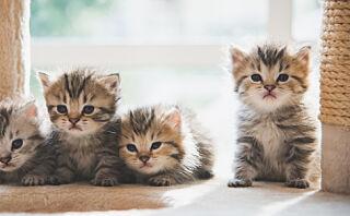 Leier du denne leiligheten får du kattunger med på «kjøpet»