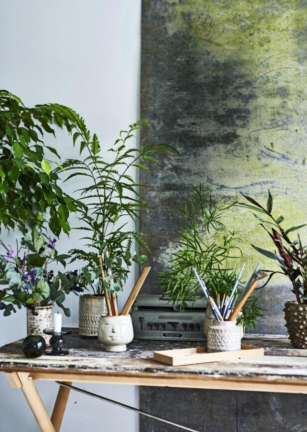 Tips! Med grønne planter ved arbeidsbordet kompenserer du for den tørre luften som datamaskinen gir.
