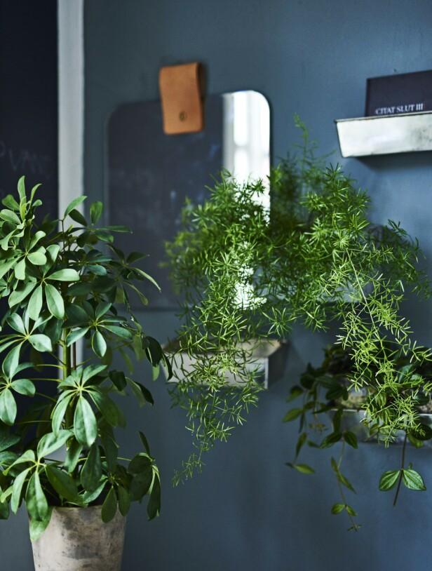 Tips! Kombinasjonen av speil og grønne planter gir en ekstra dimensjon til rommet.