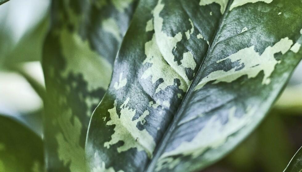 Derfor bør du investere i grønne planter til hjemmet