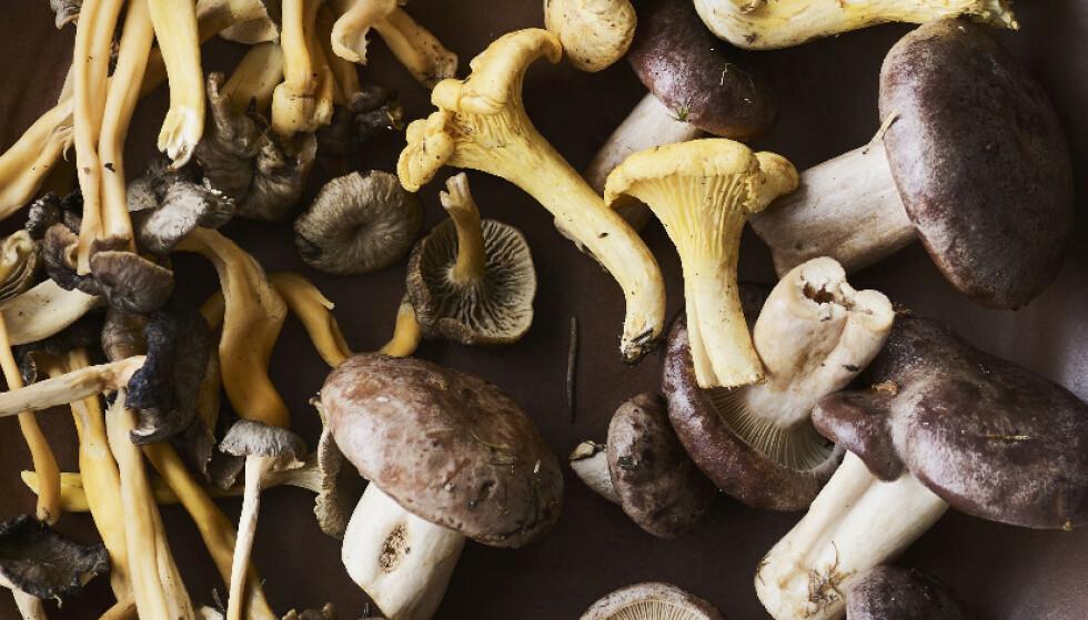 4 deilige oppskrifter med skogens gull
