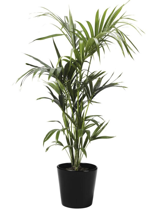 Plante (kr 700, Plantasjen). FOTO: Produsenten
