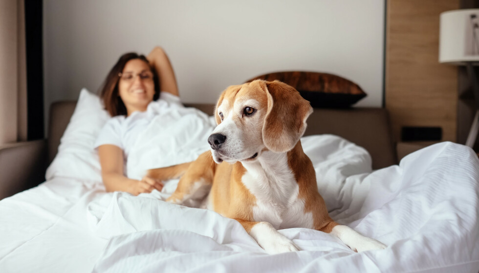 DELE SENG MED FIDO: Nå har du et motargument neste gang partneren din vil kaste hunden ut av sega. FOTO: NTB Scanpix