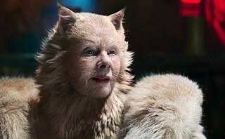 De animerte katte-kjendisene får nettet til å se rødt