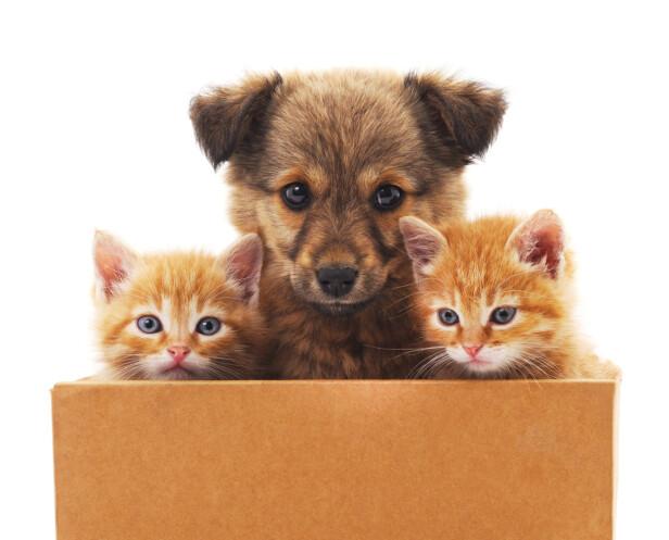 SAMMEN ER VI STERKE: Ekspertene fraråder å la dyrene være alene hjemme på nyttårsaften. FOTO: NTB Scanpix