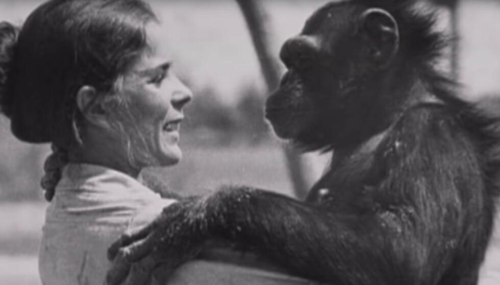 GAMLE VENNER: Linda Koebner møtte igjen Swing, 25 år etter at hun reddet henne til et liv utenfor buret i forsøkslaboratoriet. FOTO: Skjermdump fra dokumentaren Wisdom of the wild/Argo films.