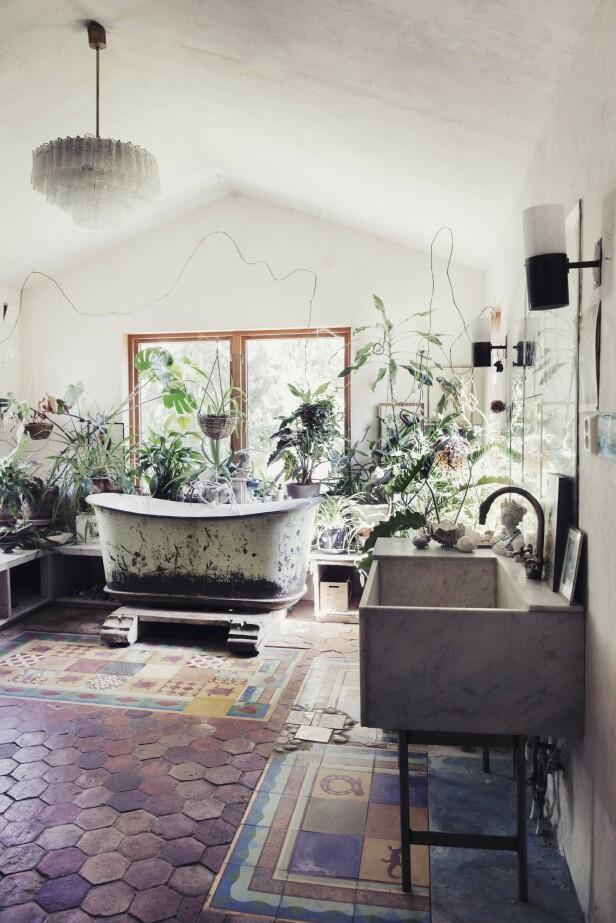 Planter gir både liv og ro, og det å stelle med dem er nesten som meditasjon for Ingvild. FOTO: Yvonne Wilhelmsen