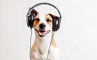 Lanserer spillelister for kjæledyr