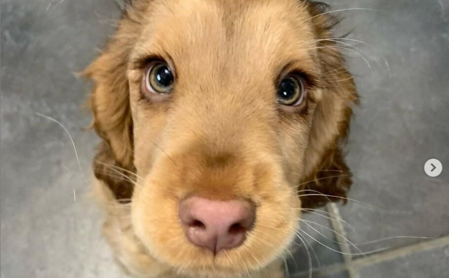 PUPPY EYES: Hunden Winnie (3 mnd) er i vinden om dagen. Skjermdump fra Instagram.