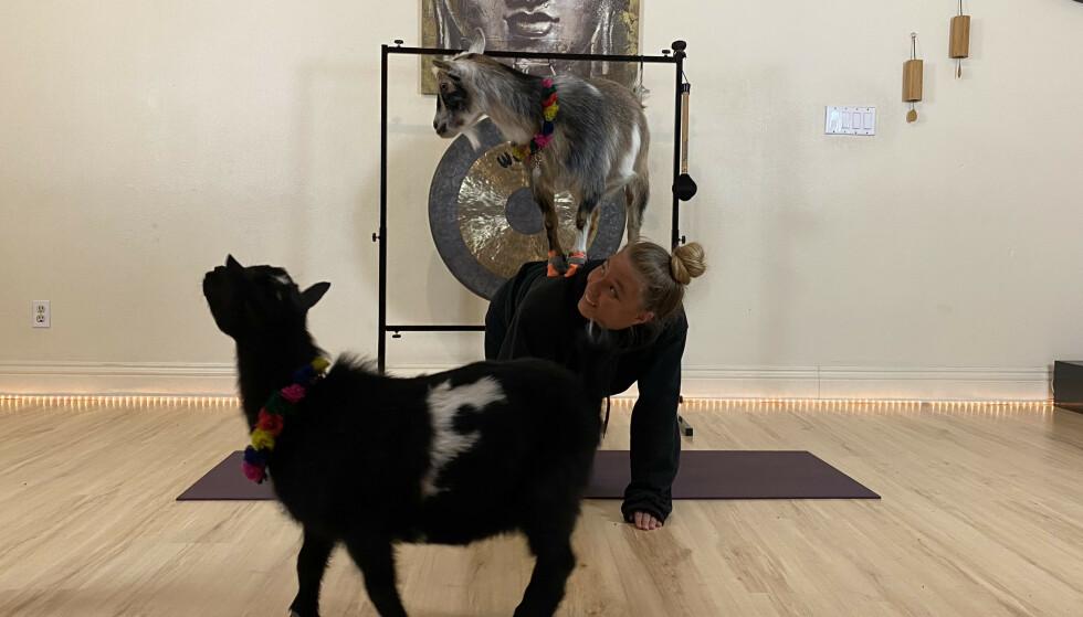 UTRADISJONELLE TRENINGSPARTNERE: Det ble aldri et kjedelig øyeblikk da jeg testet yoga med geiter. FOTO: KK