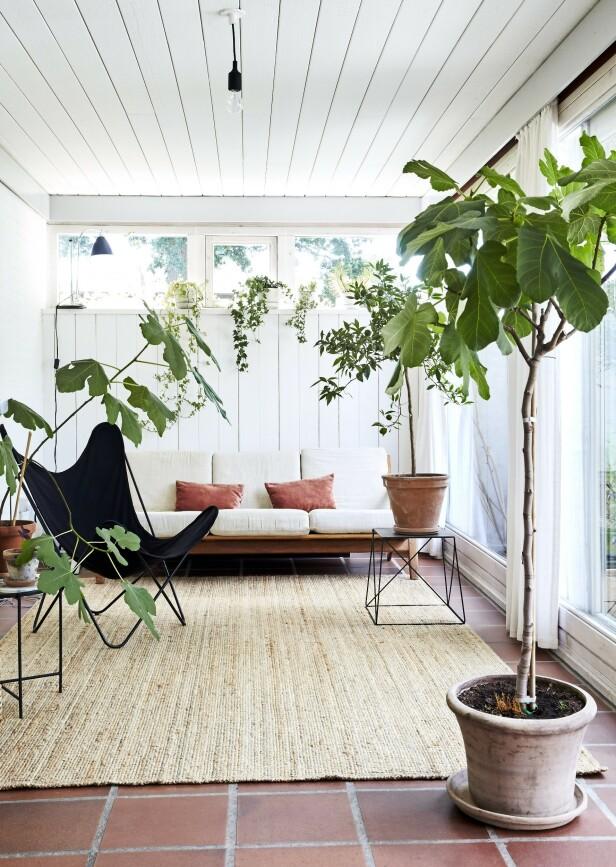 Familien elsker å oppholde seg i utestuen, som har fliser på gulvet. Wegner-sofaen har paret overtatt fra noen venner, og putene er fra Vintage 415. Gulvteppet er fra Ikea, stolen fra OX Denmarq og det firkantete bordet fra Netto. Tips! Har huset ditt fliser på gulvene, er det bare å bevare dem, for dette er trendy igjen. FOTO: Ditte Capion