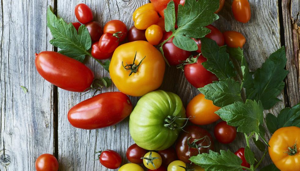 OPPSKRIFTER: Bruk tomater i forskjellige farger hvis du får tak i det. De gir ulik smak, samtidig   som det ser fint ut. FOTO: Inge Skovdal
