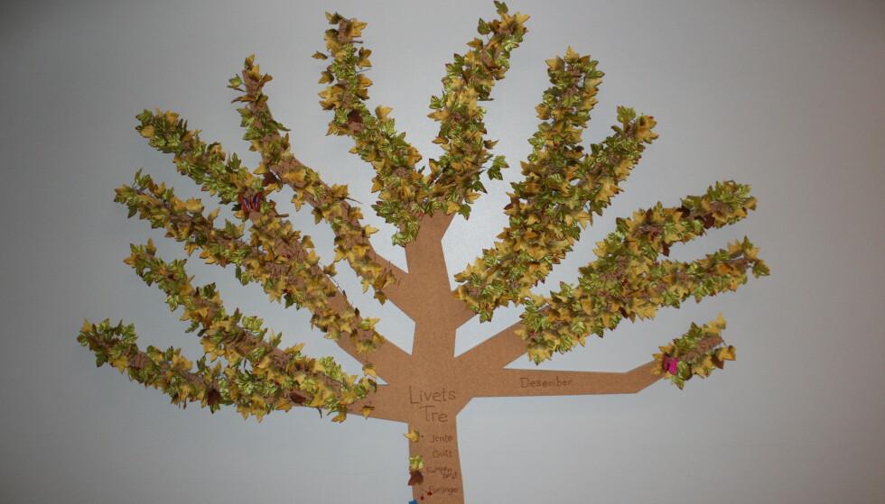 STILLE VINGESLAG: På dette treet på fødeavdelingen, på desembergrenene, sitter Thelmas rosa sommerfugl. FOTO: Privat.