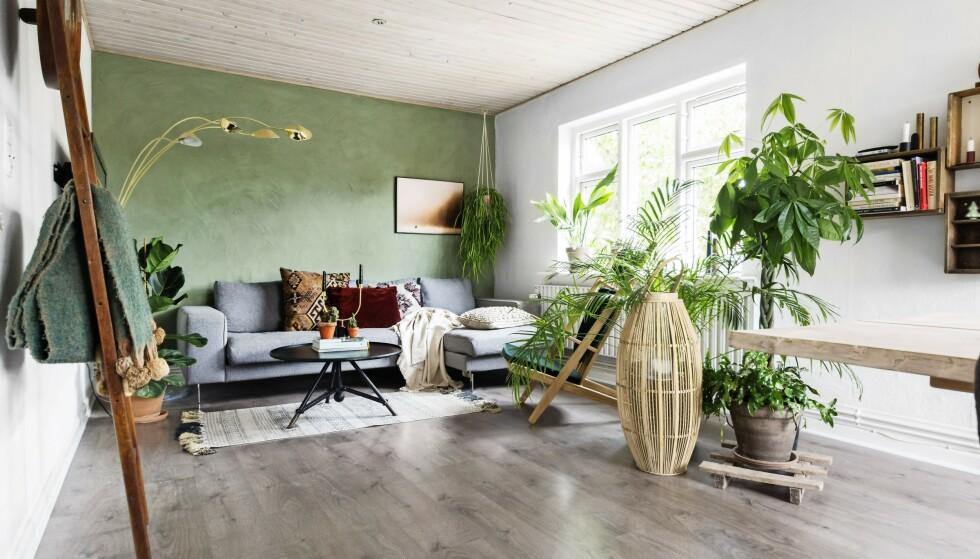 Innred hjemmet med varme farger og planter