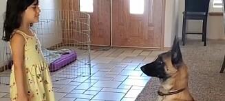 Se hunden leke gjemsel