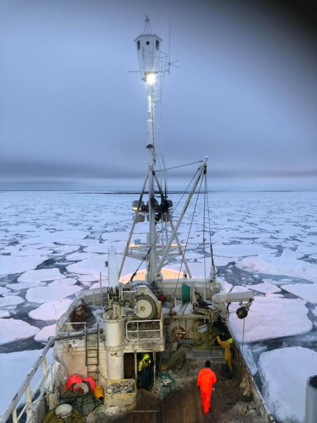 HAVISEN: «M/S Northeastern» manøvrerer seg framover i isflakene. Det er en smal båt. FOTO: Privat