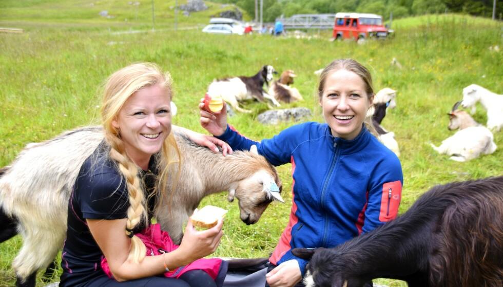 <strong>LUNSJDATE:</strong> I Kårdal holder geitene oss med selskap ved det hyggelige stølsysteriet Rallarrosa. FOTO: Mari Beraksten