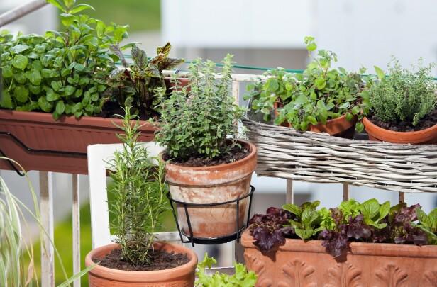 KJØKKENHAGE PÅ BALKONGEN: Du behøver ikke stor plass for å skape en kjøkkenhage, men ifølge gartner Kenneth Ingebretsen bør grønnsakene få så mye sol som mulig. FOTO: NTB Scanpix