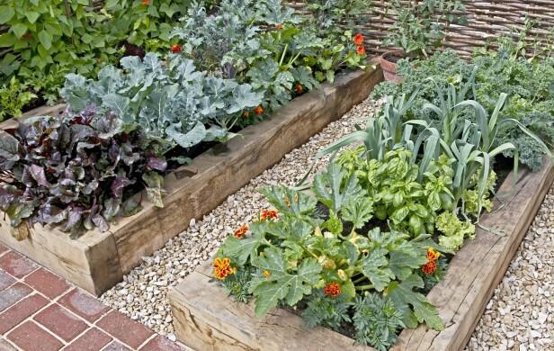 BLOMSTER BLANT GRØNNSAKENE: I Frankrike planter man blomster, gjerne spiselige, sammen med grønnsakene og urtene. Slike kjøkkenhager kalles «potager» og er ofte den vakreste delen av hagen. FOTO: NTB Scanpix