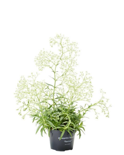 Plantasjen, kr 79