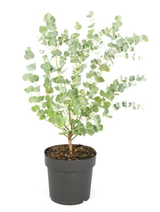 Plantasjen, kr 199