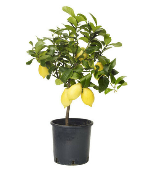 Plantasjen, kr 499