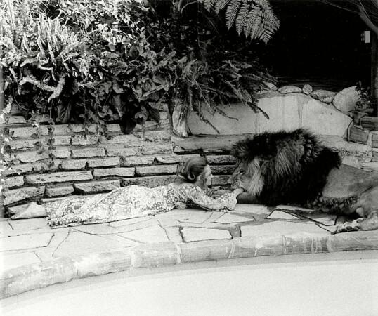 SLIPP! FLINK GUTT: Bestemor Tippi Hedren i lek med løven Neil. FOTO: NTB Scanpix