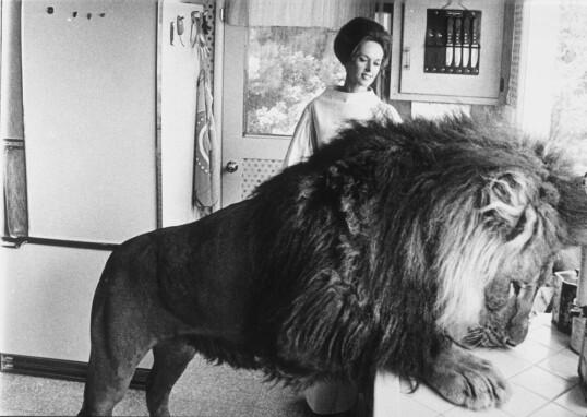 HVA ER DET TIL MIDDAG? Løven Neil og Dakotas bestemor Tippi Hedren i en hverdagsscene på kjøkkenet FOTO: NTB Scanpix