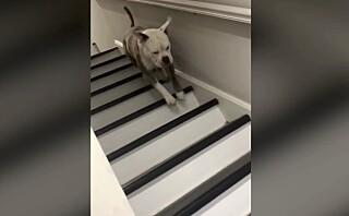 Hopper hunden opp eller ned trappen?